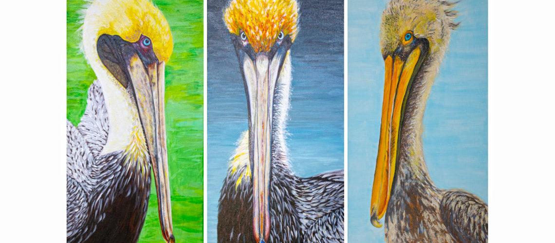 pelican_wide